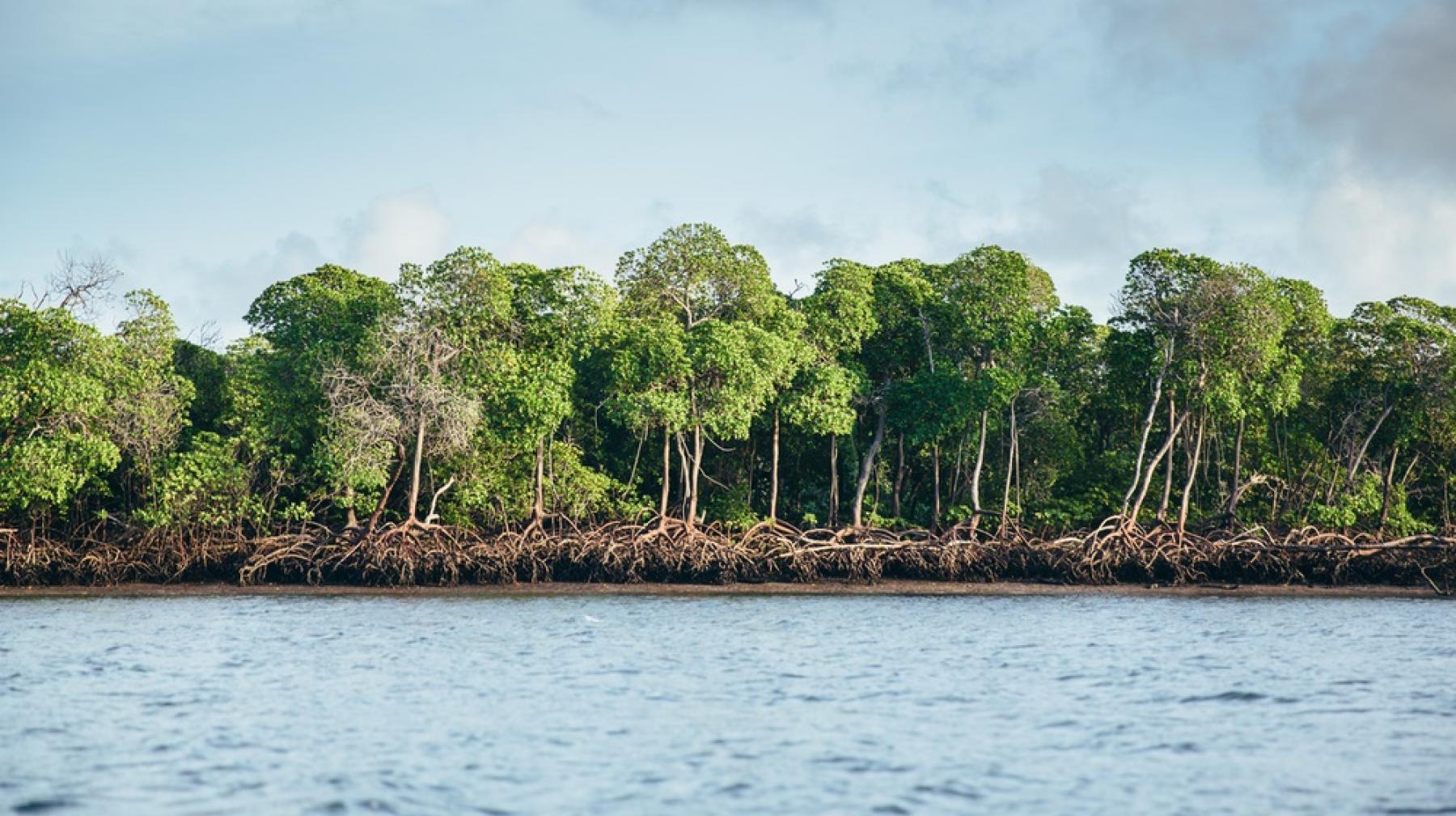 banner_image_-_mangroves